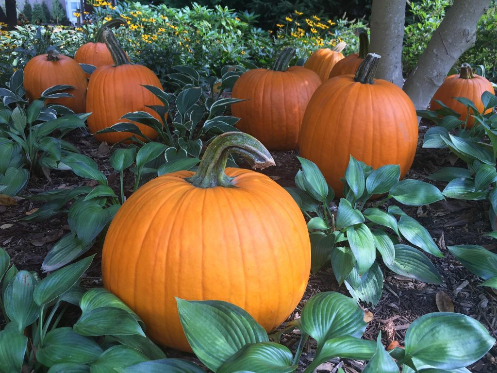 Trick or Treat at the Conservatory